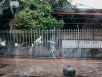 pela chuva